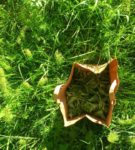 Luontoretki – inspiroidu villivihanneksista ja mehustamisesta