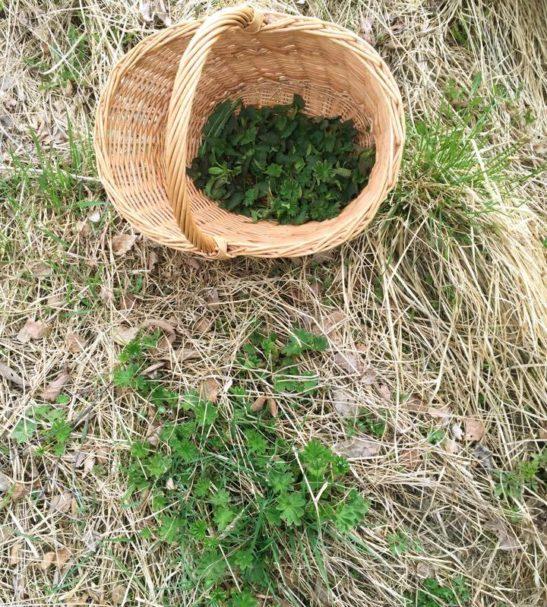 Luontoretki – hyvää oloa ja inspiraatiota villivihanneksista