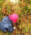 Lasten villivihannesretki syksyisessä metsässä