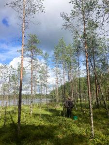 Luonnonantimien keruupalvelu Forest Foody