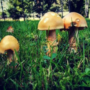 Sieniä! Tilauskurssi Uudellamaalla | Uusimaa | Hellikki