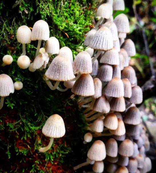 Sienten poimijakorttikoulutusta Uudellamaalla | Uusimaa | Hellikki
