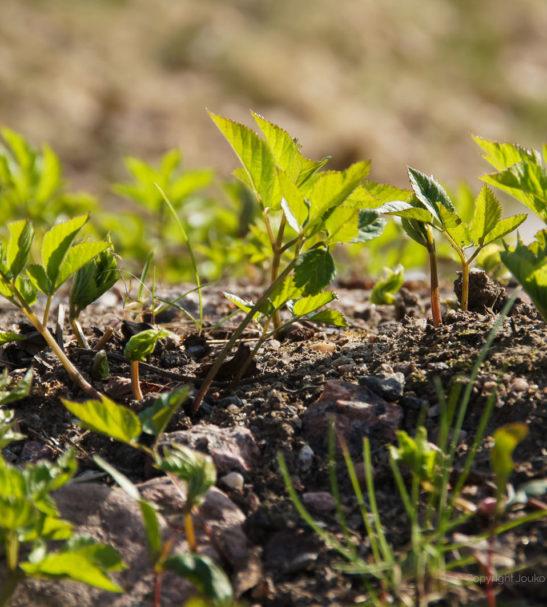 LuontoPortti Forest Foody villiyrttikurssi