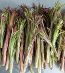 Keruupalvelu: Maitohorsman verso 500 g | Forest Foody