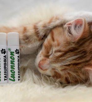 Tassupihkapuikko | Luonnon Cosmetics Hollola